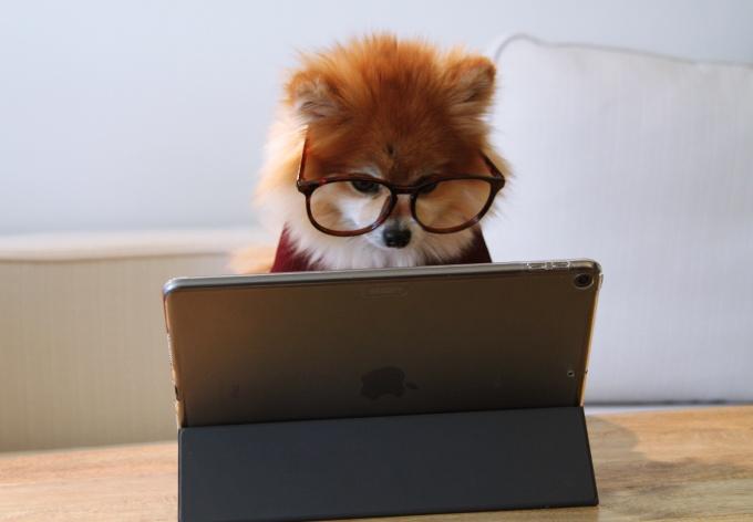 Googleアドセンスを勉強中の犬